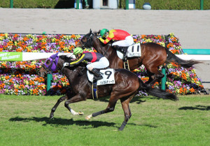 阪神競馬3Rで初勝利のジェラルディーナ(9番の馬) 騎手は北村友一