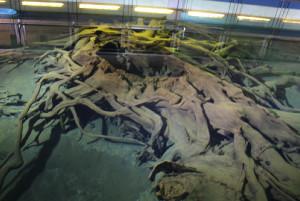 「特別天然記念物 魚津埋没林博物館」の水中埋没林