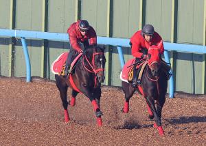 ウッドチップコースで追い切ったグラティアス(左)(カメラ・相川 和寛)