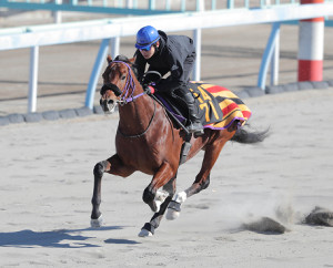 三浦皇成騎手が騎乗して平地再審査を行ったランドオブリバティ(カメラ・安藤 篤志)