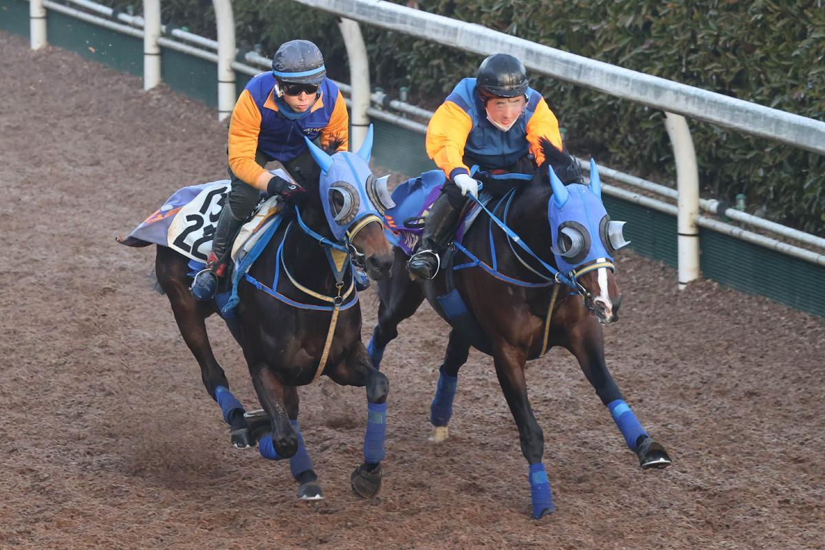 坂路コースでハギノリュクス(左)と併せ馬で追い切られたタイムフライヤー