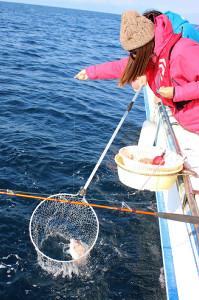 水面まで上げてきたマダイをタモ網ですくう