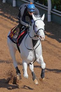 吉田隼人騎手が乗り、坂路で併せ馬に先着するソダシ(カメラ・高橋 由二)