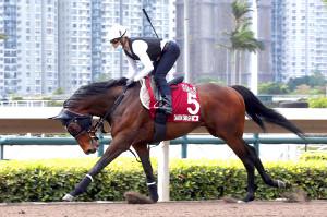 モレイラを背に調整されるダノンスマッシュ(C)Hong Kong Jockey Club