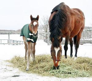 生まれたばかりの頃のタイムトゥへヴン(左)と、母キストゥヘヴン(オリオンファーム提供)
