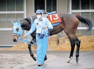 マイル戦4連勝中のテルツェットと平地G1初勝利を狙う和田正調教師