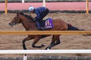 M.デムーロが騎乗し、CWコースを馬ナリで追い切られたラウダシオン(カメラ・高橋 由二)