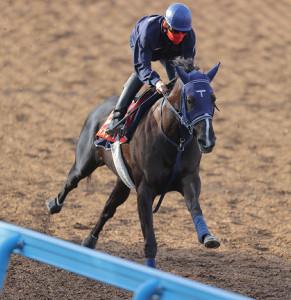 ウッドチップコースで追い切ったマルターズディオサ(馬上は嶋田純次騎手)(カメラ・相川 和寛)