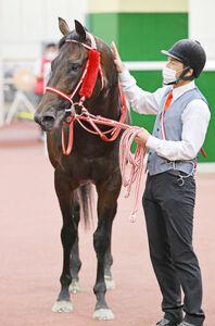 鳴尾記念で重賞初制覇を飾ったユニコーンライオン