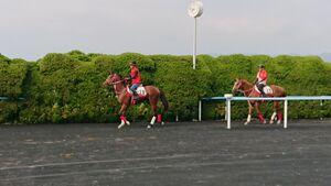 函館でゲート試験に合格したキングエルメス(左)。後ろは同じく合格したカミゴエ