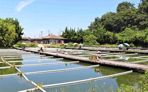 緑の木々に囲まれた阪奈園。自然を満喫しながら釣りを楽しめる