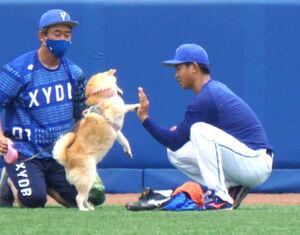 大家2軍投手コーチ(左)の犬と戯れるDeNA・今永昇太投手(右)