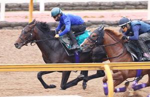 併せ馬で先着したフィデル(左)