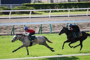 新馬のアウトパフォーム(左)は、札幌・芝コースでスピード感あふれる走りで先着