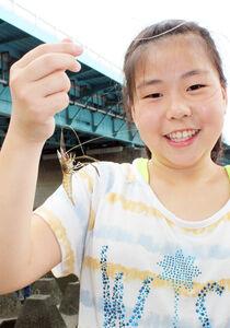 多摩川で釣れた手長エビ。気軽に楽しめるので人気がある