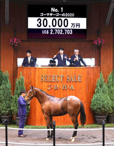 3億円で落札されたディープインパクト産駒の「ゴーマギーゴーの2020」(C)Japan Racing Horse Association