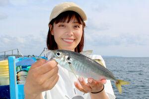 保田沖のアジは脂たっぷりで食べておいしい