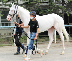 函館競馬場に入厩した白毛のソダシ(カメラ・松末 守司)