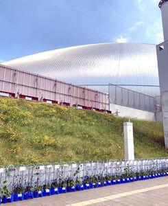 札幌ドーム前に並ぶ植木鉢(下)。観戦できない子供たちによる応援メッセージが添えられている