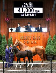 セレクトセールで4億1000万円で落札されたキズナ産駒の「セルキスの2021」(C)Japan Racing Horse Association