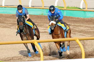 函館・Wコースでドナアトラエンテ(左)との併せ馬を行ったマジックキャッスル
