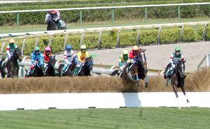 2番手で最終障害を飛び越えたトゥルボー(右から2頭目)が重賞初制覇(カメラ・恩田 諭)
