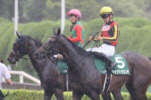 ドナアトラエンテ(手前のゼッケン5番・川田将雅騎手)は11着