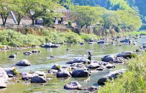 女性や初心者にも釣りやすいと人気の土居川