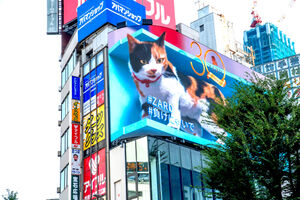 """ZARDと""""コラボレーション""""する新宿駅東口駅前の大型街頭ビジョンの3D巨大三毛猫"""