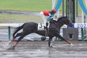 2馬身半差で快勝したドライスタウト。鞍上の福永は通算2500勝を達成した