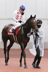 モンテディオは3着に入り、菊花賞の優先出走権を得る(カメラ・高橋 由二)